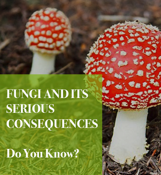 ads - Fungi and Its Serious Consequences - Do You Know?